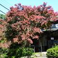 Photos: ケーブル八瀬駅の紅葉