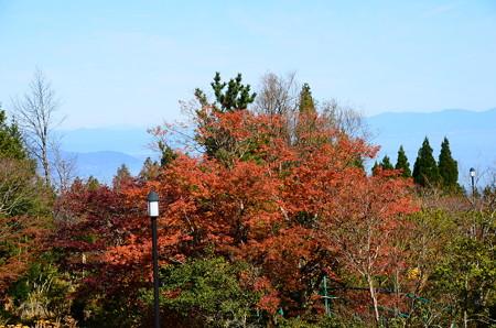 ガーデンミュージアム比叡の紅葉
