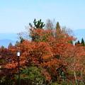 Photos: ガーデンミュージアム比叡の紅葉