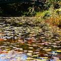 Photos: モネの池の色づき