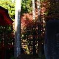 横川中堂脇の紅葉