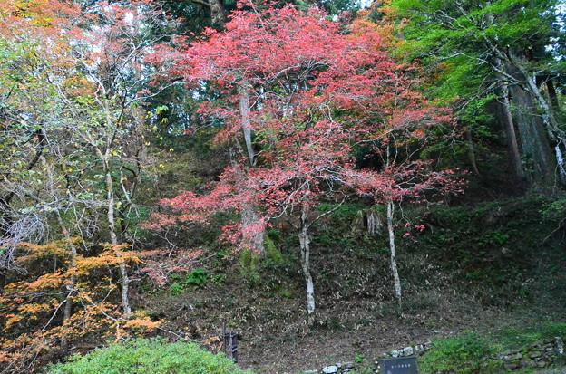 浄土院脇の紅葉