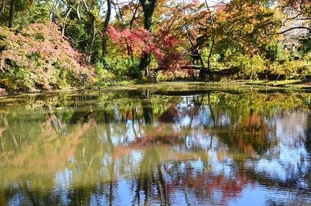 秋空と色づきを映す池