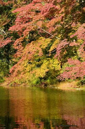 色づく水面