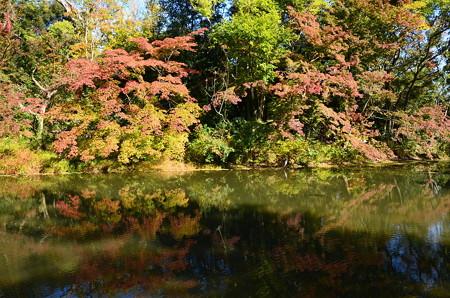色付きの始まった植物園