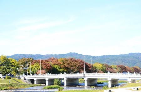 色づき進む賀茂川