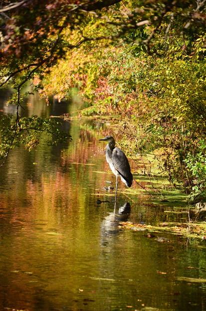 Photos: 秋に佇む