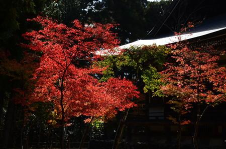 毘沙門堂脇の紅葉