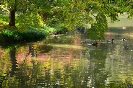 色付きの始まった池で