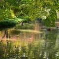 Photos: 色付きの始まった池で