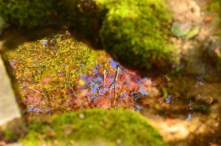 秋を写す~