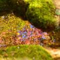 Photos: 秋を写す~