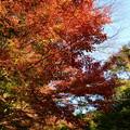 Photos: 西明寺の紅葉