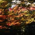 Photos: 裏山の彩り
