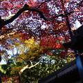 Photos: 門脇の紅葉