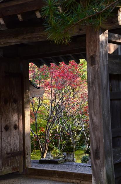 門から覗く紅葉