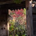 Photos: 門から覗く紅葉