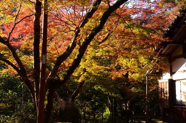 紅葉の西明寺
