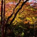 Photos: 紅葉の西明寺