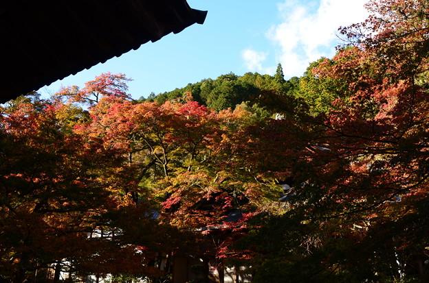 Photos: 西明寺の色づき