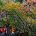Photos: 指月橋を渡って