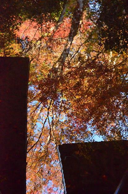 水面の秋空