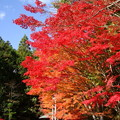 Photos: 府立ゼミナールハウスの紅葉