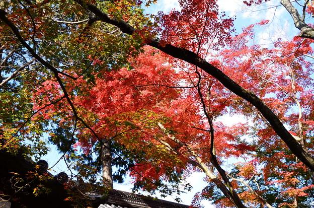 屋根を蔽う紅葉