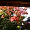 顕岑院の紅葉