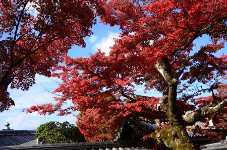 覚圓院の紅葉