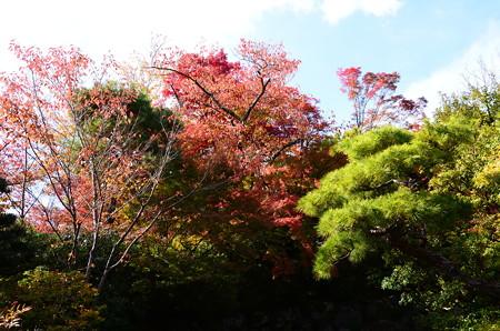 吉田山荘の彩り