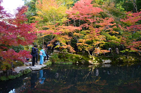 池を囲む彩