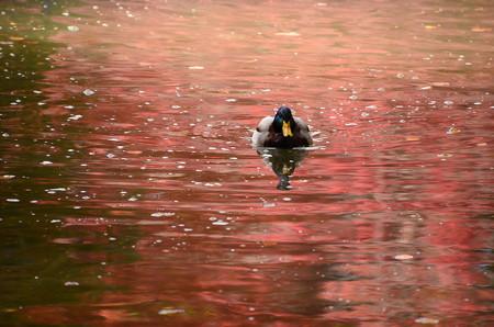 彩りの中を泳ぐ
