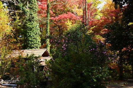 水車小屋の秋