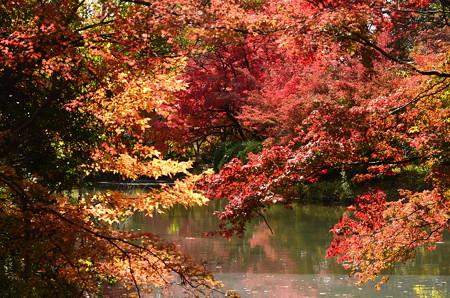 紅葉の府立植物園