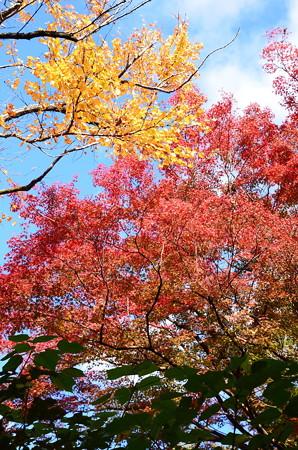 秋空を彩って~