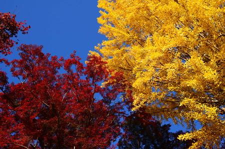 秋の三色~