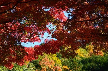 鮮やかな秋