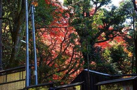 八大神社から見る詩仙堂の紅葉