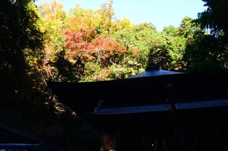 光明殿裏の紅葉