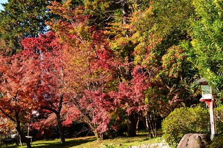 鷺森神社の紅葉