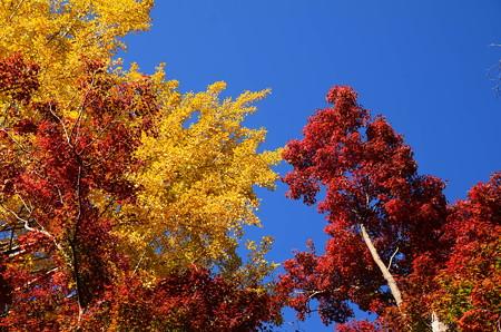 秋空の彩り