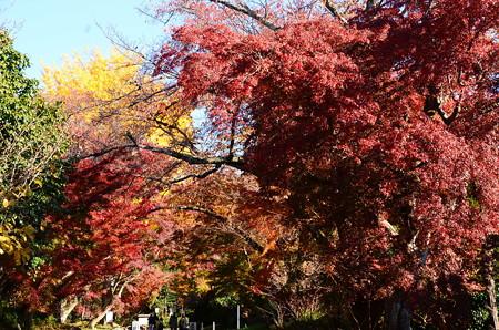 紅葉の鷺森神社