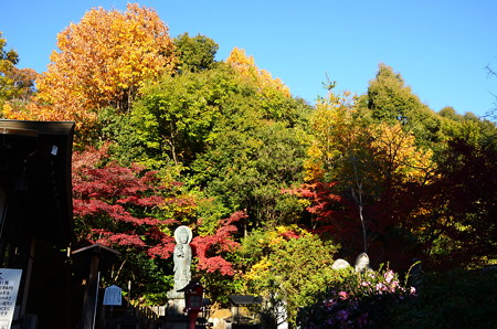 松ヶ崎大黒天の秋彩