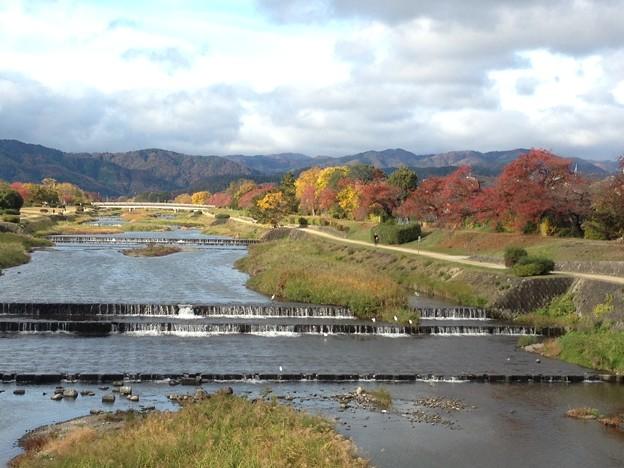 晩秋の賀茂川