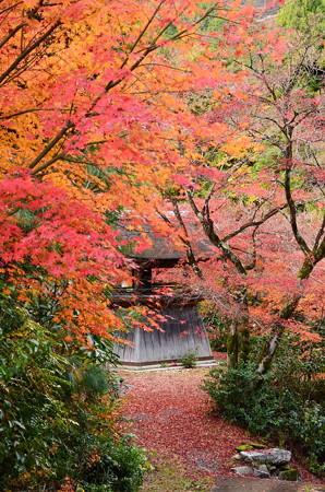 鐘楼を包む紅葉