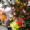 Photos: 彩りに前に咲く