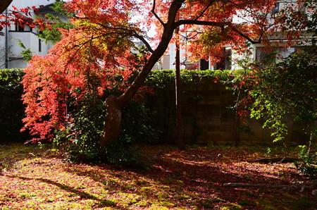 秋の光と影