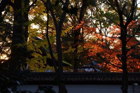 夕陽に照らされる河合神社