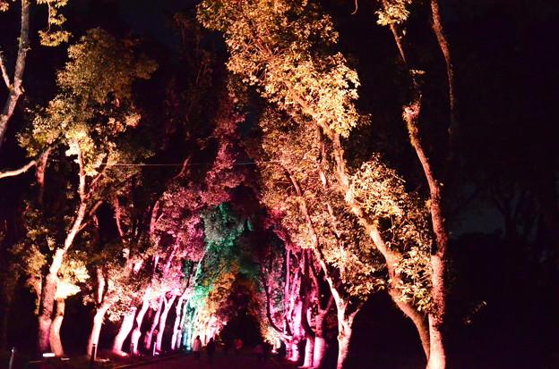 楠並木のライトアップ